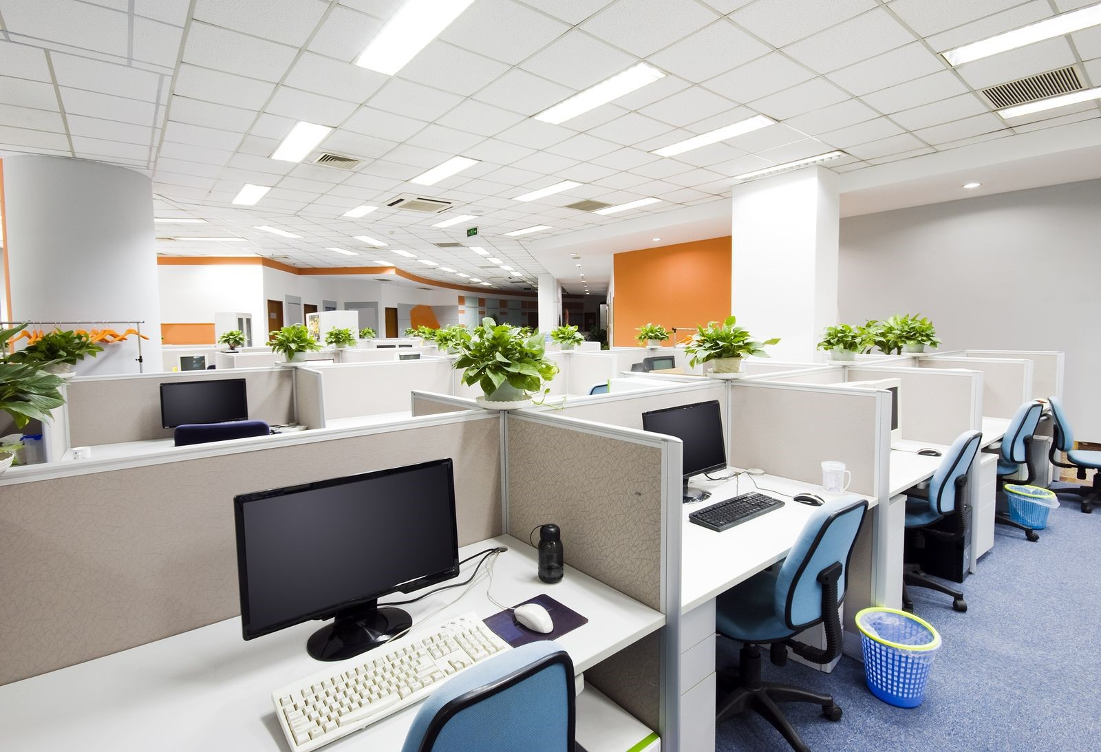 Keeping Your Office Space Free of Common Pests